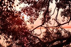 在树后灌木的太阳天际与赤红的 库存图片