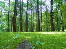 在树后的公园在晴天 免版税图库摄影