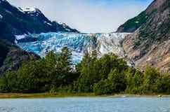在树后的冰川 库存图片
