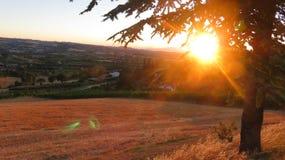 在树后的国家黄色日落 库存照片