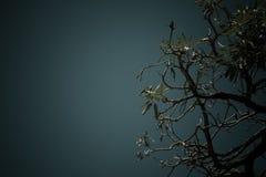 在树后的天空 图库摄影