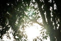 在树后的太阳光 库存图片