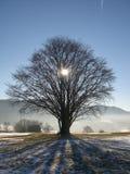 在树后的太阳在冬天 图库摄影