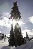 在树后的太阳射线 免版税库存照片