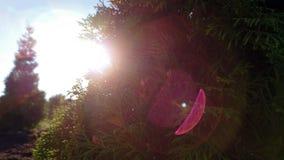在树后的太阳 免版税图库摄影