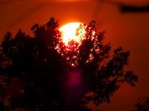 在树后的太阳 免版税库存图片