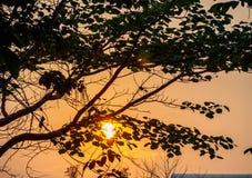 在树后的日落 库存照片