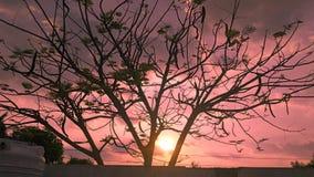 在树后的日落 免版税库存照片