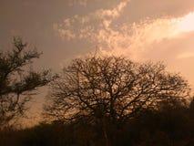 在树后的日落 E 图库摄影