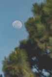 在树后的月亮 免版税库存图片