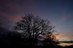 在树后的美好的天际 免版税库存照片