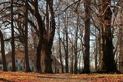 在树后的老房子 免版税图库摄影