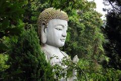 在树后的菩萨雕象 奇恩角Swee寺庙,马来西亚 库存照片