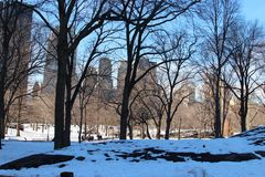 在树后的NYC摩天大楼在中央公园 免版税库存照片