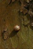 在树吠声的一只蜗牛  免版税库存照片