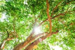 在树和夏天晴朗的明亮的天下 库存图片