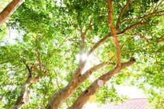 在树和夏天晴朗的明亮的天下 库存照片