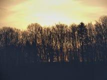 在树和小山后的日出 免版税库存图片
