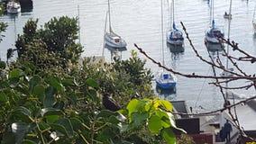 在树和小船的鸟 免版税图库摄影
