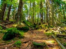 在树和岩石中的路在GÃ ³ ry Stolowe在波兰 库存照片
