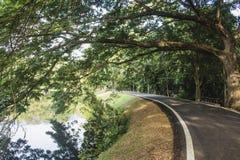 在树和湖之间的空的柏油路Ang Kaew水库的 与阻拦太阳的分支的巨型的树 免版税库存图片
