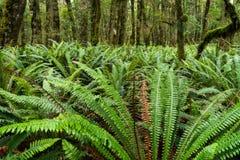 在树和蕨的青苔 免版税库存照片