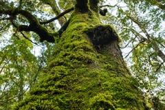 在树和蕨的青苔 免版税库存图片