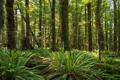 在树和蕨的青苔 库存图片