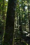 在树和蕨的青苔 库存照片
