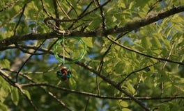 在树困住的玩具 图库摄影