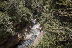 在树围拢的谷中间的河 免版税库存图片