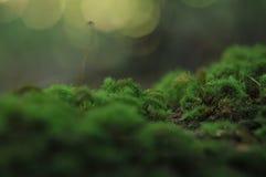 在树在热带庭院里,绿色叶子纹理,叶子的绿色青苔在热带森林里 库存图片