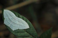 在树在热带庭院里,绿色叶子纹理,叶子的野生蝴蝶在热带森林里 库存图片