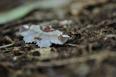 在树在热带庭院里,绿色叶子纹理,叶子的野生蝴蝶在热带森林里 免版税图库摄影
