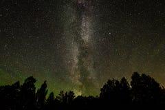 在树夜空和剪影的美丽的银河星系  免版税库存图片