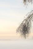 在树大树枝的新近地下落的雪 免版税库存图片