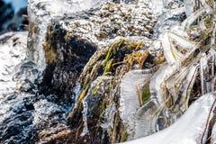 在树带界线的冰柱落瀑布 免版税库存照片