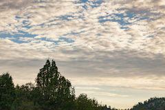 在树带界线的天空 库存照片