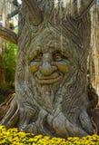 在树干吠声的面孔 库存图片