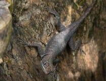 在树干困住的蜥蜴 免版税图库摄影
