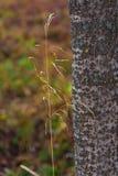 在树干旁边的一棵小草 免版税库存照片