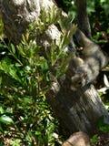 在树干栖息的灰鼠 免版税库存图片