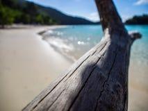 在树干海湾,圣约翰,维尔京群岛的漂流木头 免版税库存图片