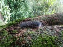 在树干的一个生物 免版税库存照片