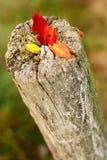 在树干的五颜六色的秋叶 免版税库存照片