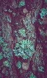 在树干的五颜六色的青苔 描述一个宏观看法的照片 免版税库存照片
