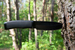 在树干的刀子 库存图片