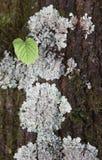 在树干的叶子 图库摄影