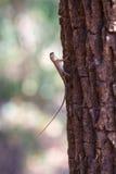 在树干的小蜥蜴 免版税库存图片