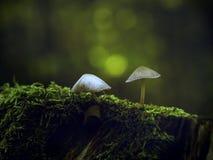 在树干的微小的蘑菇 免版税图库摄影